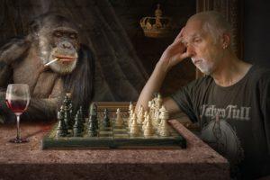 l'homme descend du singe